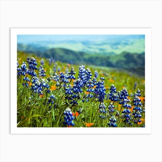 Lupine Mountain Background Art Print