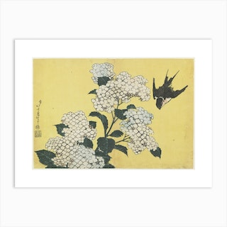 Hydrangea And Swallow Art Print