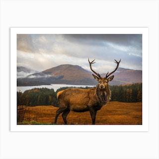 Scottish Stag Art Print