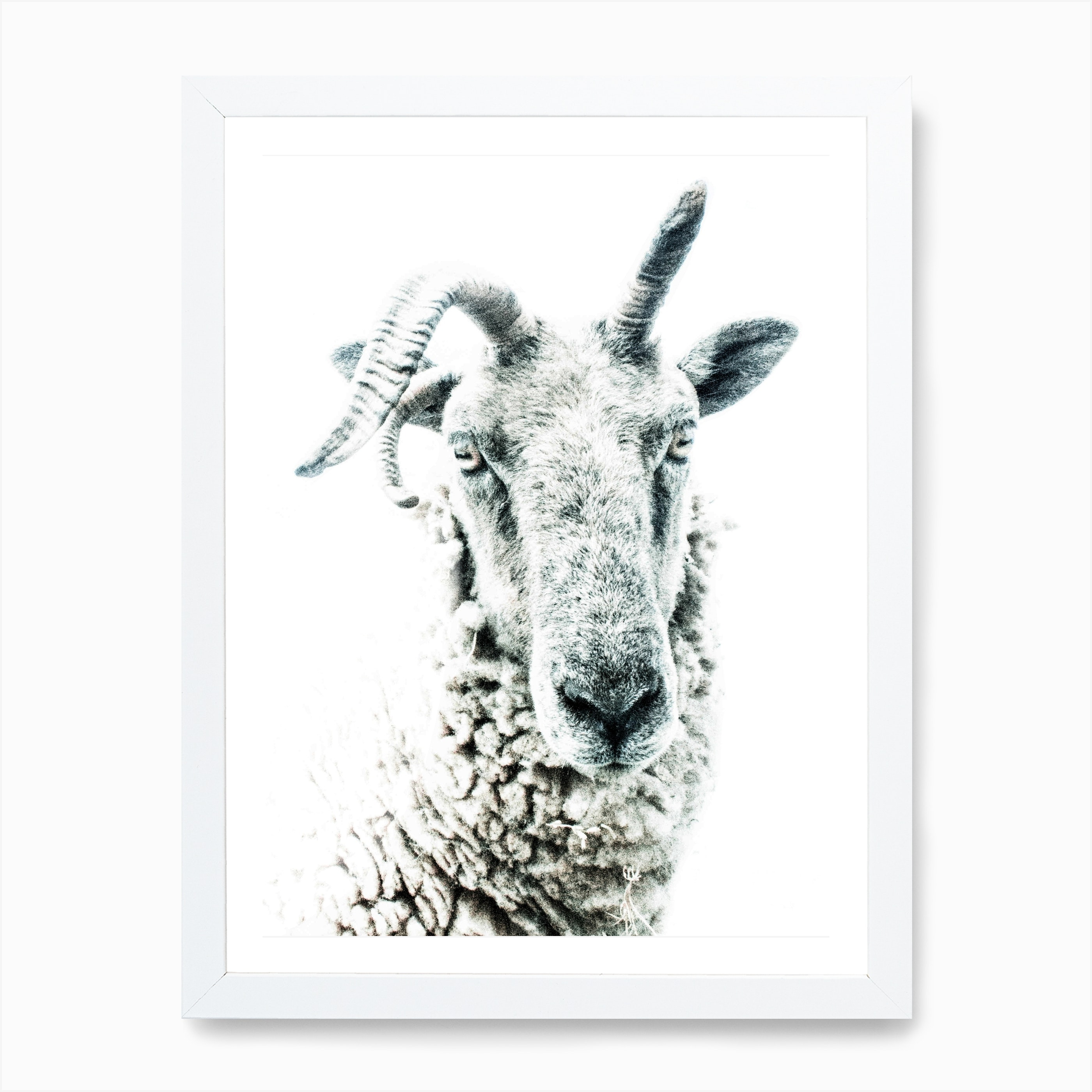 Sheep 1 Art Print Free Shipping Fy