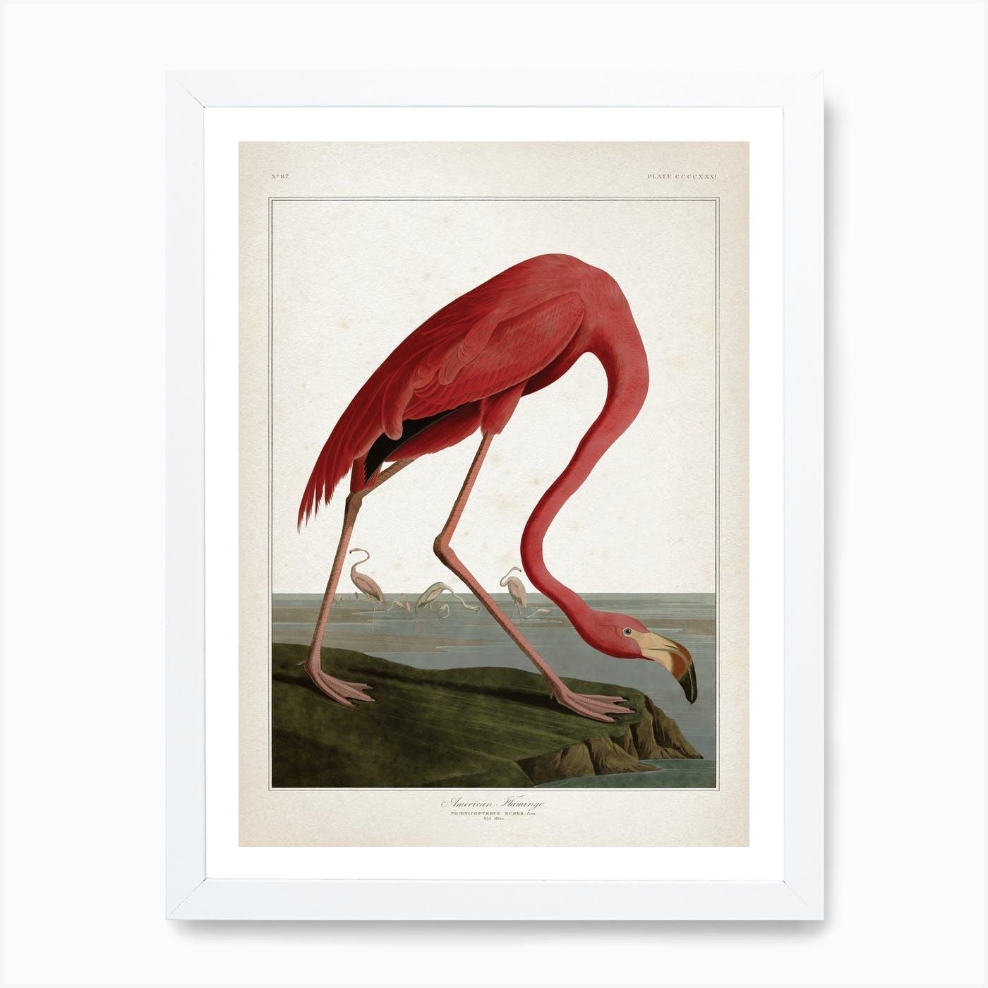 American Flamingo Archival Print