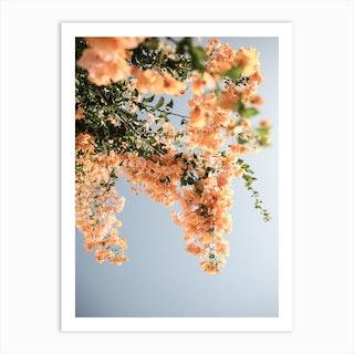 Assos Blooms Art Print