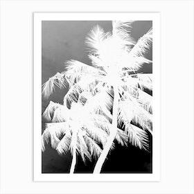 Coco Island 01jpg Art Print