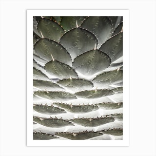 Agave Layers Art Print
