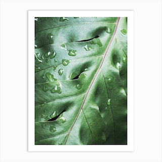 Waterdrops On Green Leaf Art Print