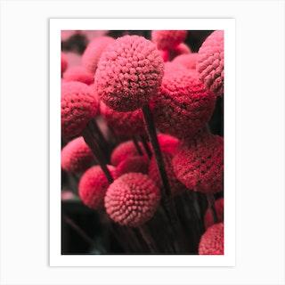 Pink Bommels Art Print