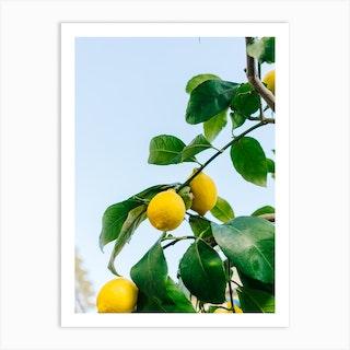 Amalfi Coast Lemons III Art Print