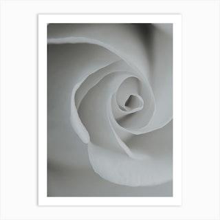 White Rose Detail Art Print
