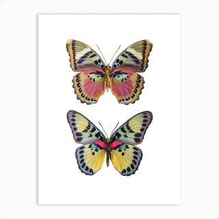 Two Colored Butterflies Art Print