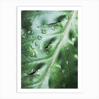 Waterdrops On Green Leaf Art Print
