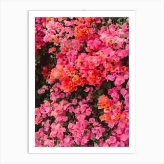 California Blooms Art Print