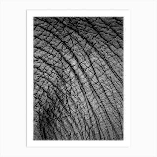 Elephant Study 02 Art Print
