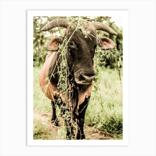 Botanical Bull Art Print