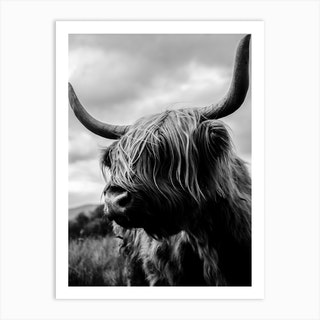 Scottish Highland Cattle Black And White Art Print