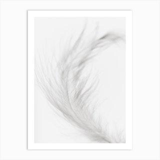 White Feather 2 Art Print