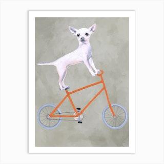 Chihuahua On Bicycle Art Print