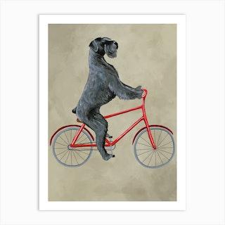 Schnauzer On Bicycle Art Print