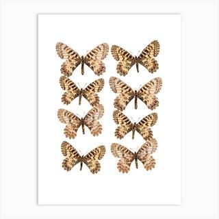 Two Rows Of Butterflies Art Print