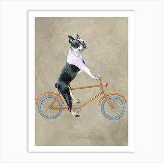 Boston Terrier On Bicycle Art Print