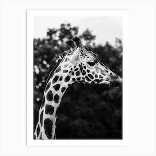 Wild Giraffe 1 Bw Art Print