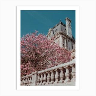 Pink Blossom In Paris Art Print