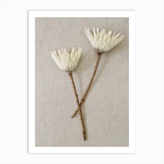 Minimal White King Proteas Art Print