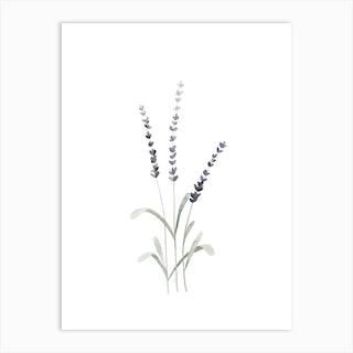 Lavender 2 Art Print