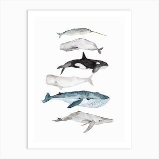 Sea Life Whales Art Print