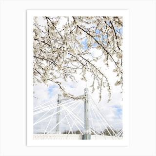 Albert Bridge Blossom Art Print