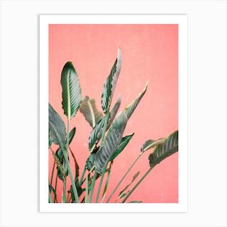 Pink Jungle Art Print