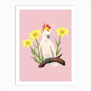 Major Mitchells Cockatoo Pink Art Print