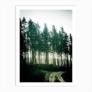 Kielder Trees Art Print