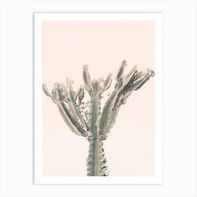 Sunset Cactus Ii Art Print