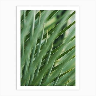 Green Palm Nature Art Print