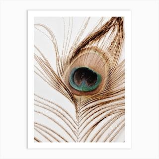 Peacock Feather 2 Art Print