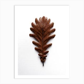 Shapes Grafic Oak Leaf Art Print