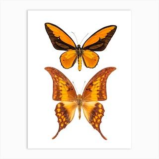 Two Orange Butterflies 2 Art Print