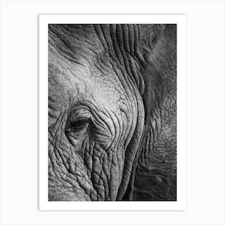 Elephant Study Art Print