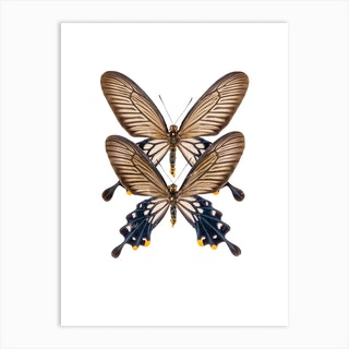 Two Black Butterflies Art Print