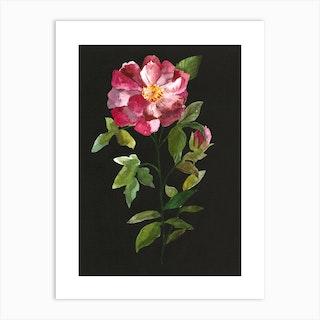 Douce Rose Art Print