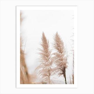 Reeds Dreamy Pampa Grass Art Print