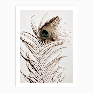 Peacock Feather 3 Art Print