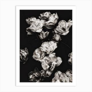 White Tulips 2 Art Print