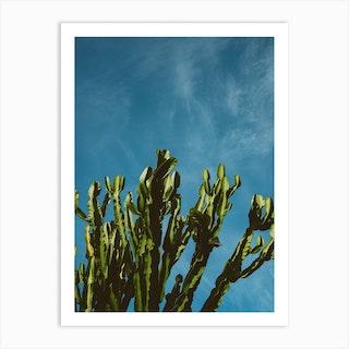 Cactus Sky Art Print