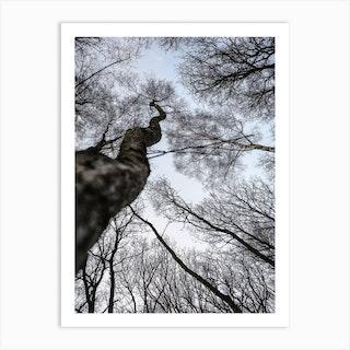 Forest 02 Art Print