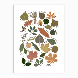 Leaf Chart Art Print