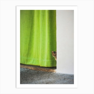 Cat And The Curtain Art Print