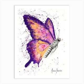 Venus Sunset Butterfly Art Print