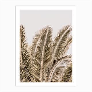 Desert Palm Art Print