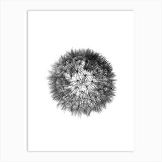 Grey Grafic Dandelion Art Print